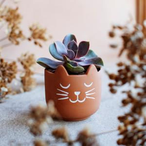 Minikruka Katt