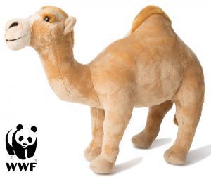 Dromedar - WWF (Världsnaturfonden)