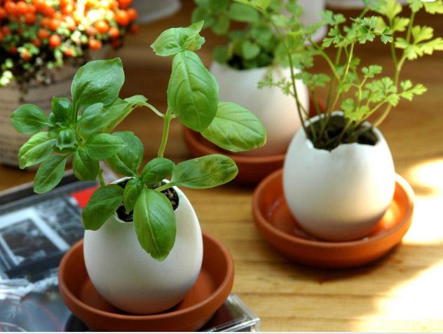 Eggling - plantering i ett ägg (Smultron) • Pryloteket